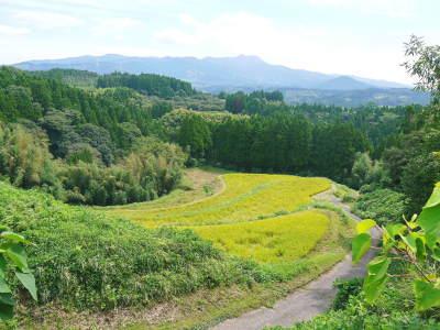 菊池水源棚田米 今年も順調に実っています。まもなく令和3年度の稲刈りです!水にこだわる匠のお米!! _a0254656_18363519.jpg