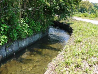 菊池水源棚田米 今年も順調に実っています。まもなく令和3年度の稲刈りです!水にこだわる匠のお米!! _a0254656_18405409.jpg