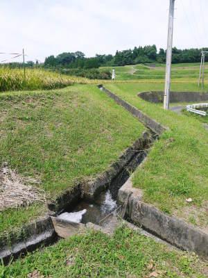 菊池水源棚田米 今年も順調に実っています。まもなく令和3年度の稲刈りです!水にこだわる匠のお米!! _a0254656_18414004.jpg