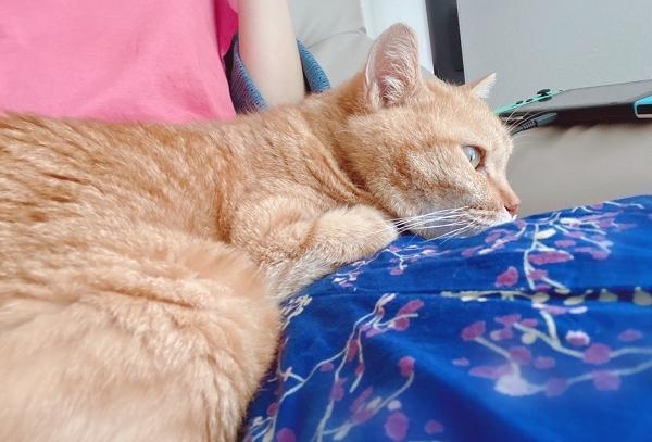 招き猫の日の招き猫練り切りと、我が家の招き猫(9月のあぺりら)_d0025294_19334345.jpg