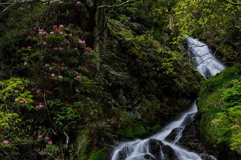 石楠花咲く御船の滝_f0155048_21204272.jpg
