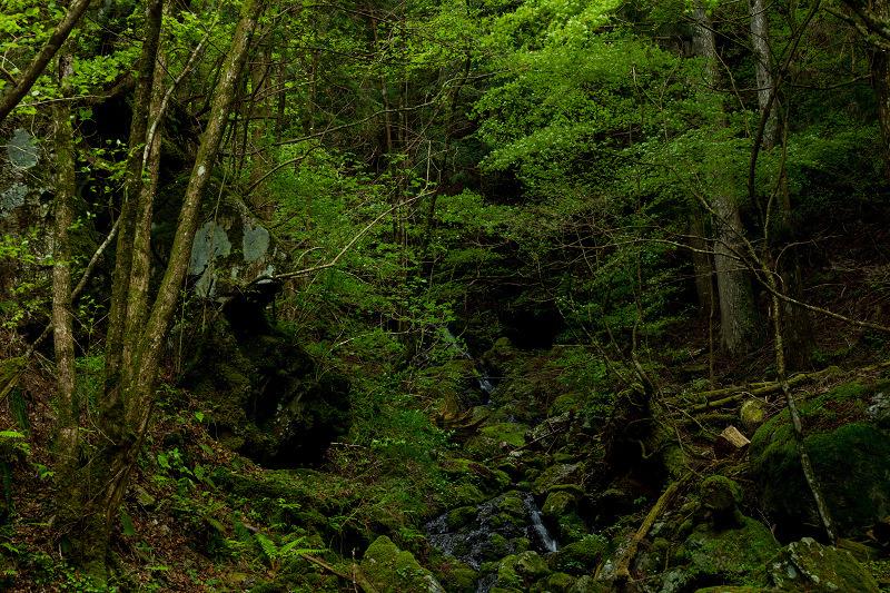 石楠花咲く御船の滝_f0155048_21205975.jpg