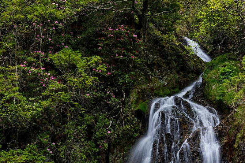 石楠花咲く御船の滝_f0155048_21221125.jpg