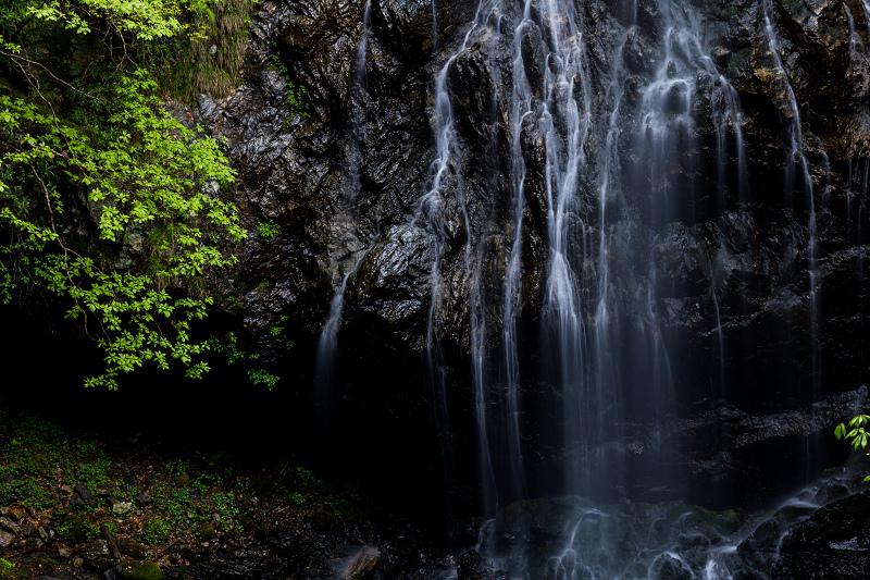 石楠花咲く御船の滝_f0155048_21222545.jpg
