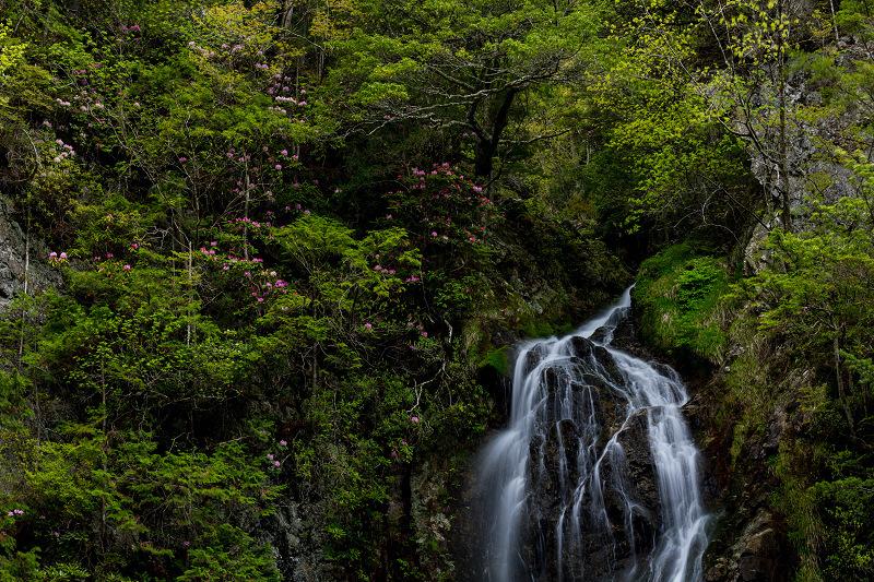 石楠花咲く御船の滝_f0155048_21224244.jpg