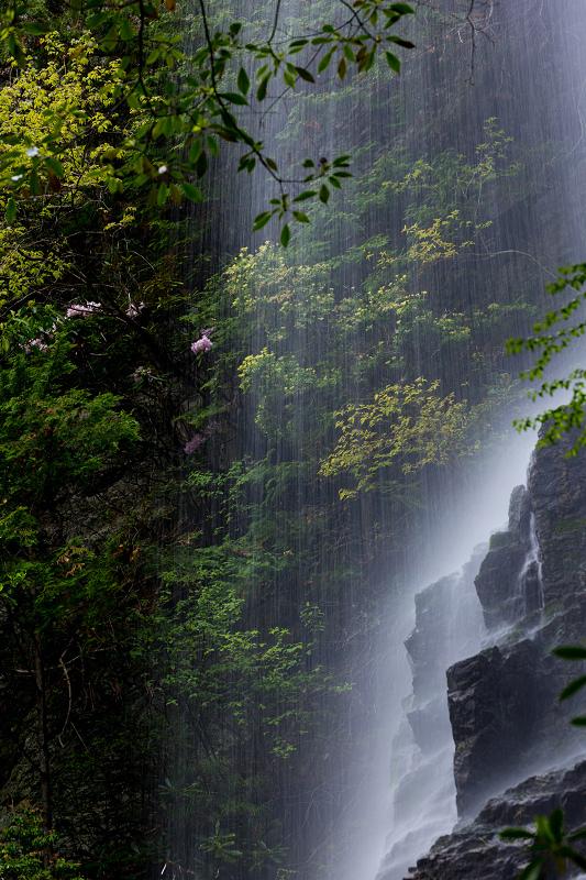 石楠花咲く御船の滝_f0155048_21255124.jpg