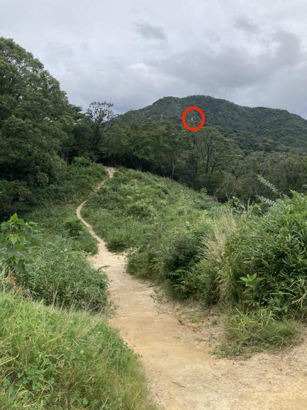 Twin Snakes / RX at Ashiya Rock Garden(芦屋ロックガーデン)pt.1_b0220886_17371148.jpg