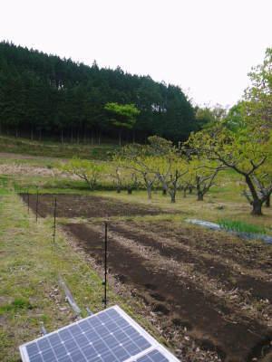 栗の王様『利平栗』令和3年度も完売御礼! 熊本県菊池市の山奥で無農薬、無化学肥料で育てた『利平栗』です_a0254656_17161727.jpg