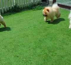亀岡に犬と一緒に遊べるカフェができました〜BINSさんのお店のこととフェルトの雑貨_f0129557_16212689.png