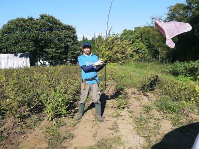 令和3年の「白エゴマ」の収穫スタート(前編) 無農薬で育てた菊池水源産『えごま油』は数量限定評販売中!_a0254656_18061666.jpg