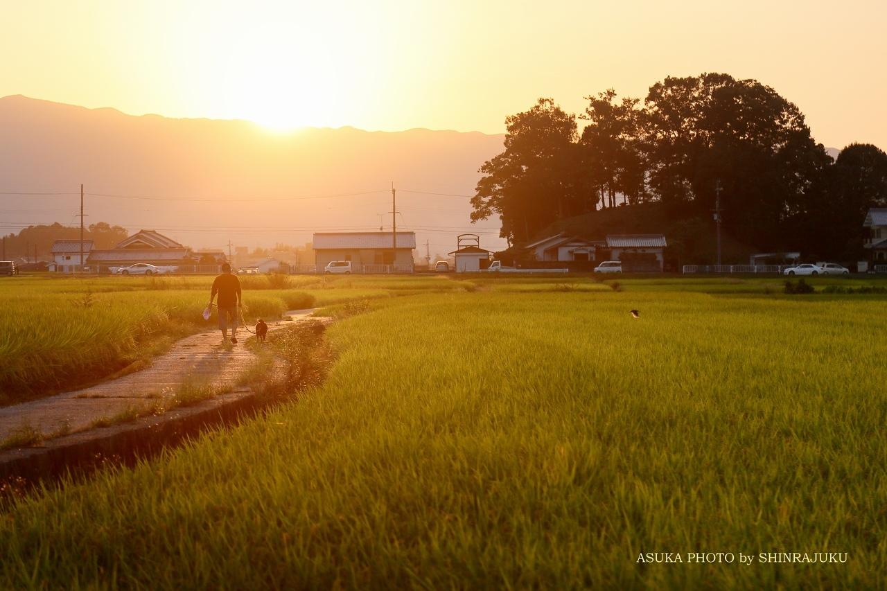 田んぼの中の散歩道_a0278377_14581479.jpg