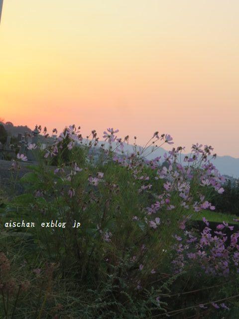 栗の季節と秋のお散歩♪_e0406439_12200780.jpg