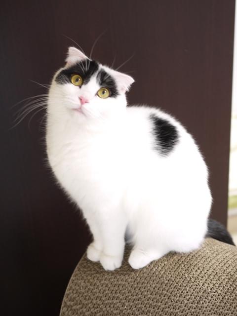 猫のお留守番 ミーちゃん編。_a0143140_22140840.jpg