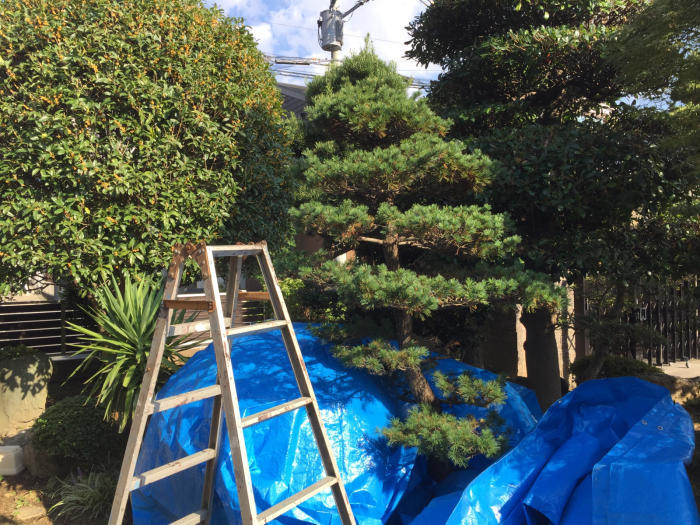 庭の木々の剪定_f0122241_09225942.jpg