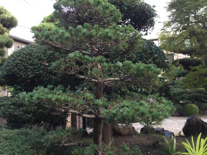 庭の木々の剪定_f0122241_09235494.jpg