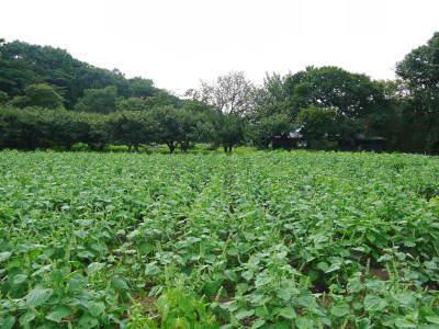 令和3年の「白エゴマ」の収穫スタート(後編) 無農薬で育てた菊池水源産『えごま油』は数量限定評販売中! _a0254656_18462010.jpg