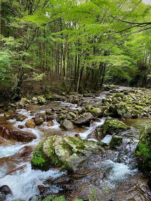 茶臼山_e0092186_11242503.jpg