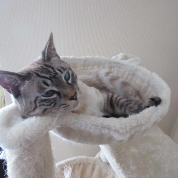 猫あるある&猫カレンダー_d0009101_19335241.jpg
