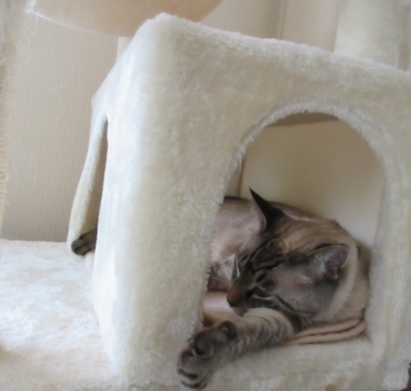 猫あるある&猫カレンダー_d0009101_19342160.jpg