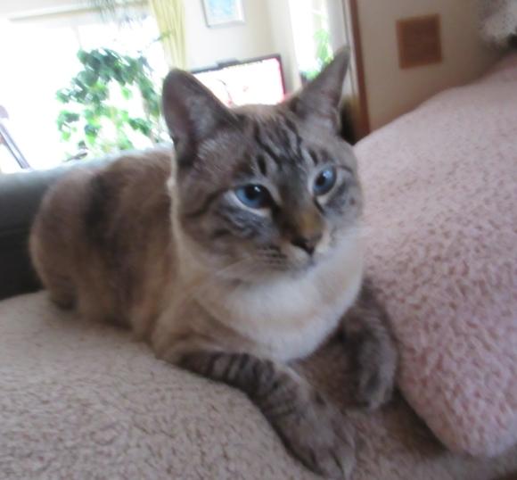 猫あるある&猫カレンダー_d0009101_19345553.jpg