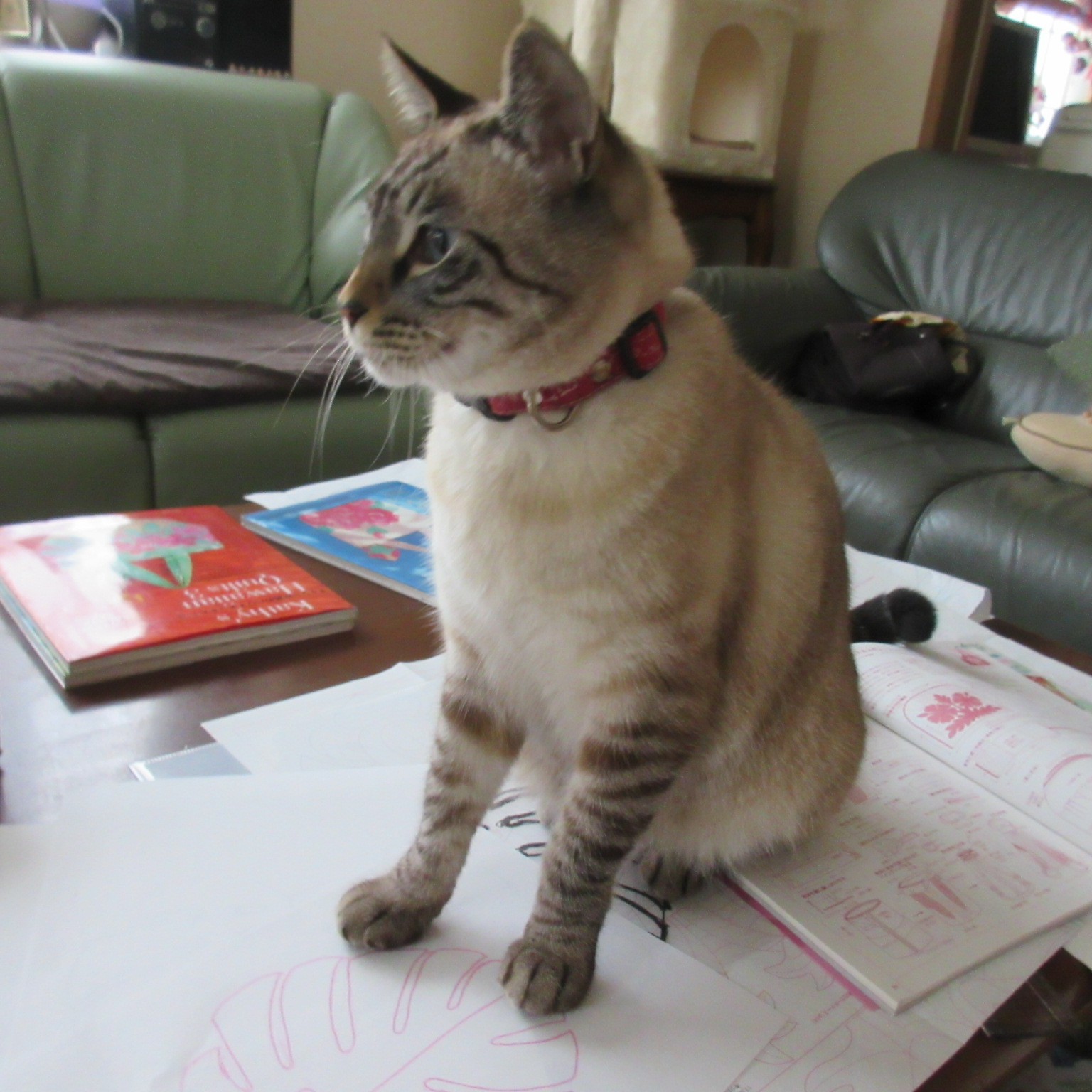 猫あるある&猫カレンダー_d0009101_19352050.jpg