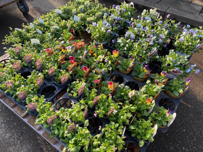 新しい苗や鉢など入荷してます。_c0288235_13100972.jpg