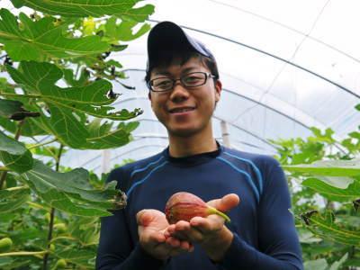 『甘熟いちじく』数量限定、完全予約制好評発売中!いちじくは不老長寿の果実とも呼ばれているフルーツです_a0254656_17543552.jpg
