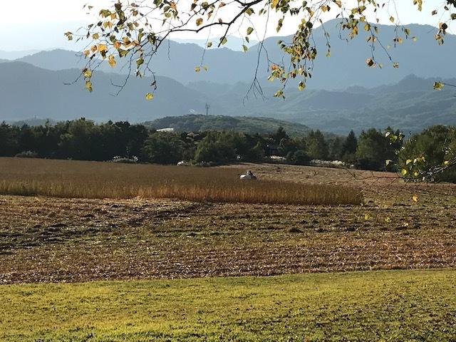 秋のたかつえそば畑_c0155576_14503874.jpg