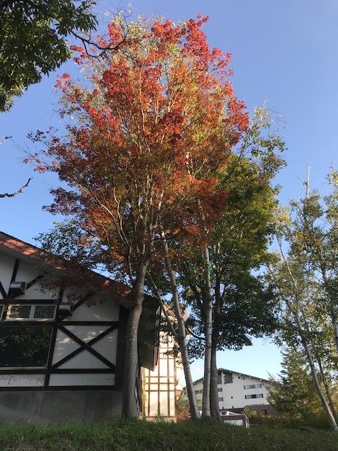 秋のたかつえそば畑_c0155576_14531295.jpg