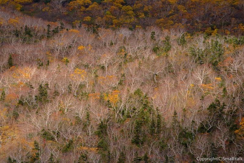 枯れ木の華_d0094105_23093098.jpg