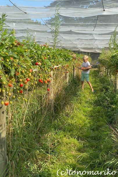 パリ郊外の農園においしいもの探しへ_c0024345_17111916.jpg