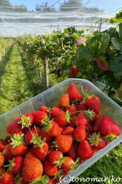 パリ郊外の農園においしいもの探しへ_c0024345_17111966.jpg