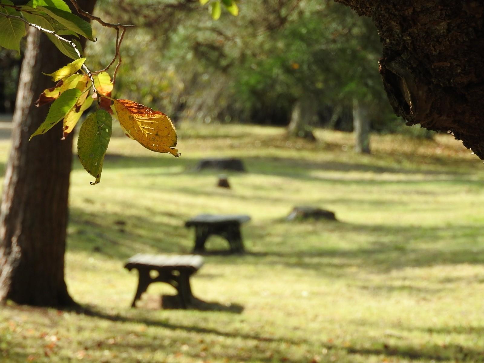 秋が・・・。_e0406450_22004078.jpg