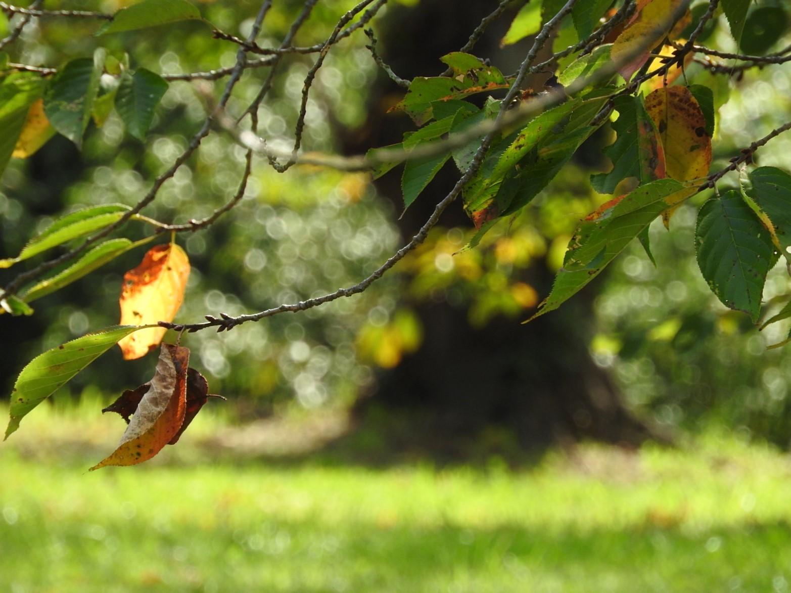 秋が・・・。_e0406450_22011140.jpg