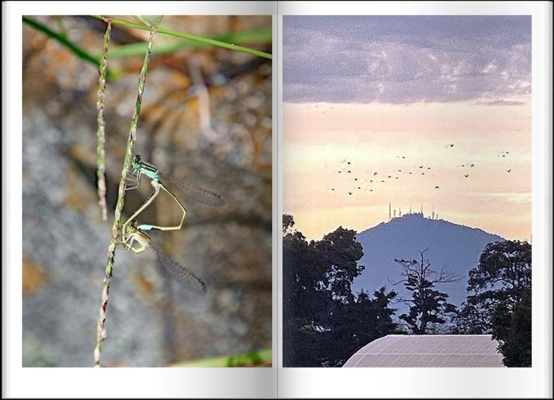 のんびり秋散歩_d0102968_05154388.jpg