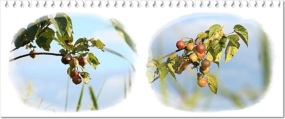のんびり秋散歩_d0102968_05155018.jpg