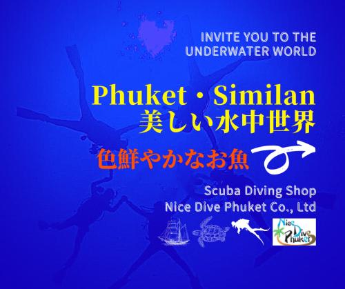 美しい水中世界【色鮮やかなお魚】_f0144385_11181146.png