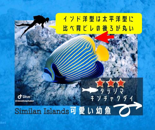美しい水中世界【色鮮やかなお魚】_f0144385_11182168.png