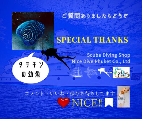 美しい水中世界【色鮮やかなお魚】_f0144385_11183020.png