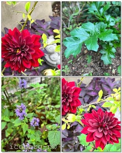 アキチョウジの花が満開です。_e0366161_20085945.jpeg