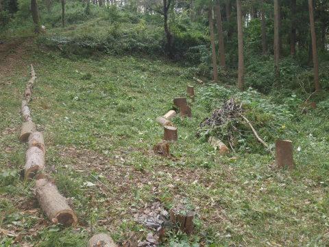 エゴノキの苗木植樹場所確保10・7六国見山手入れ(上)_c0014967_10155860.jpg