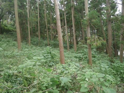 エゴノキの苗木植樹場所確保10・7六国見山手入れ(上)_c0014967_10162705.jpg
