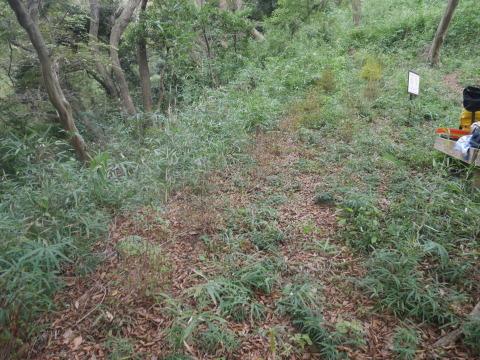 エゴノキの苗木植樹場所確保10・7六国見山手入れ(上)_c0014967_10184809.jpg