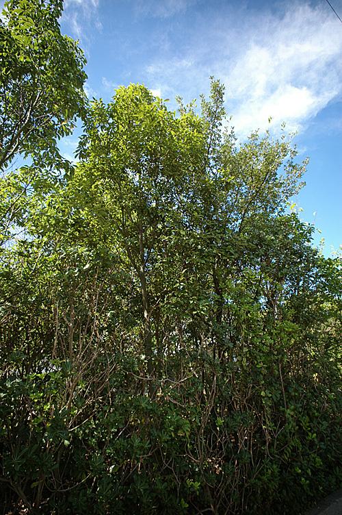 鎮守の森 Project_e0066586_18503636.jpg