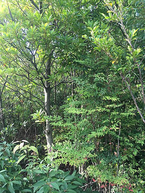 鎮守の森 Project_e0066586_18505370.jpg