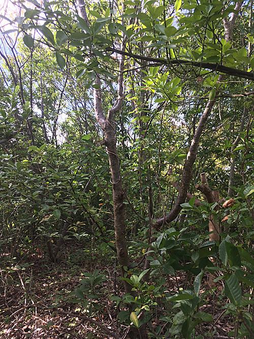 鎮守の森 Project_e0066586_18505535.jpg