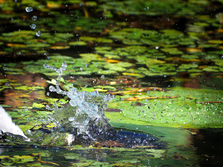アオサギ魚ゲット_e0254493_15213173.jpg