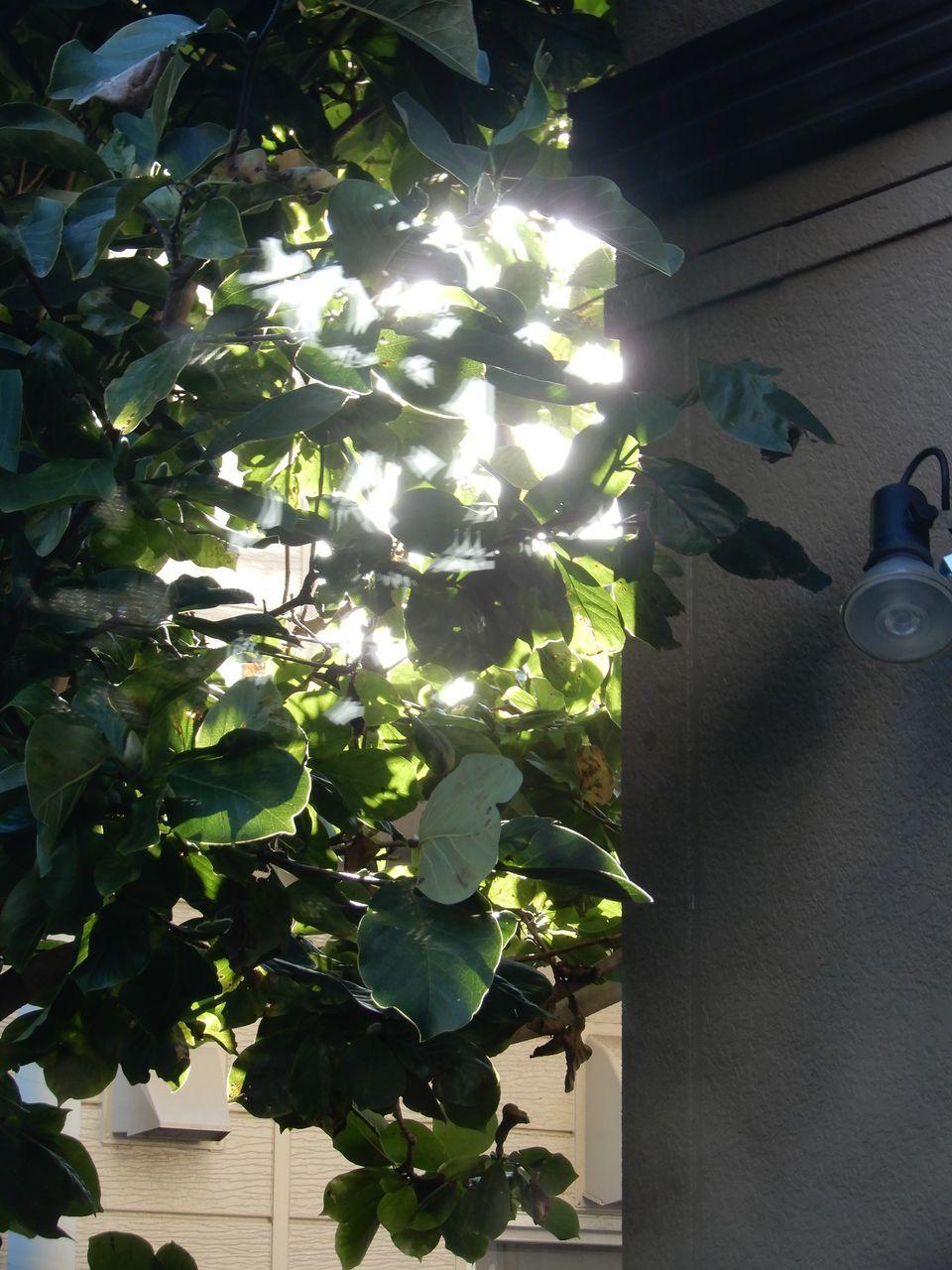 暖かめの秋の一日_c0025115_21435935.jpg