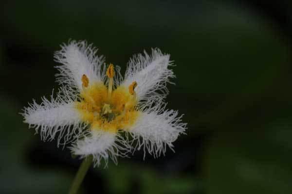 庭の花_c0404426_15593043.jpg