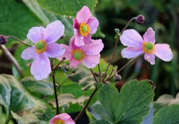 庭の花_c0404426_16075647.jpg
